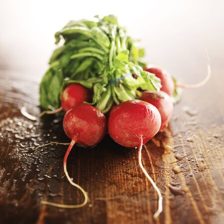 bunched: freshly picked radishes with copy space on wooden table