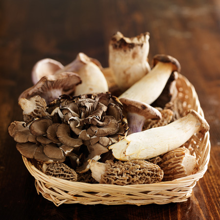 basket of assorted gourmet mushrooms Stock Photo