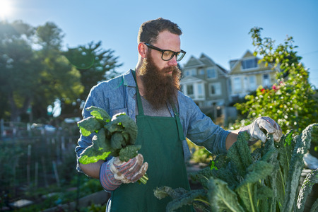 communal: harvesting kale inside of urban communal garden