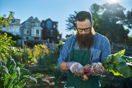 hobbies: gardener inspecting freshly picked beets in communal urban garden