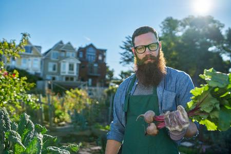 urban gardening: proud gardener showing freshly picked beets in urban communal garden