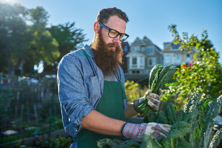 millennial: bearded man with glasses tending to urban garden Stock Photo