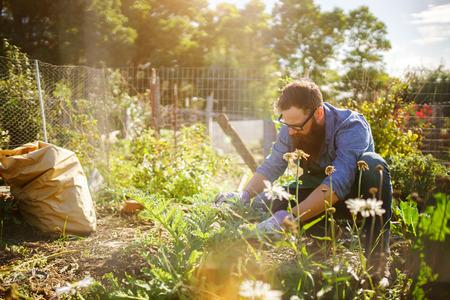 髭の男は共用の庭で作物を収穫