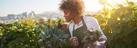 African american woman tending to kale in communal urban garden