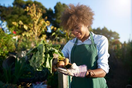 African american woman inspecting freshly harvested golden beets in community communal garden