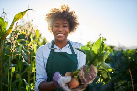 African american gardener posing for portrait with freshly harvested golden beets