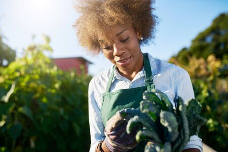 African american female gardener inspecting freshly picked kale from urban community garden Standard-Bild