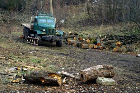 poacher: truck in the woods