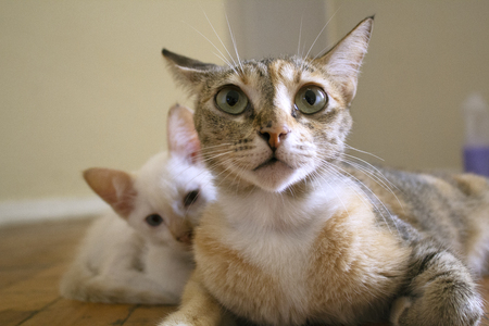 Cute facial expression. Mom cat with kitten. Imagens