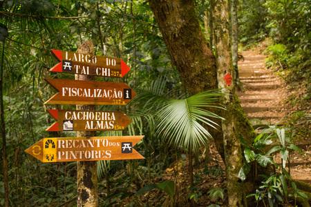 Rio de Janeiro, Brazil - January 20, 2019: Beautiful green nature in the Atlantic Rainforest, Tijuca Forest National Park Redakční