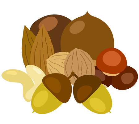 mixed nuts: Nut collection variety compilation Illustration