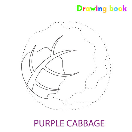 Purple cabbage coloring and drawing book vegetable design illustration