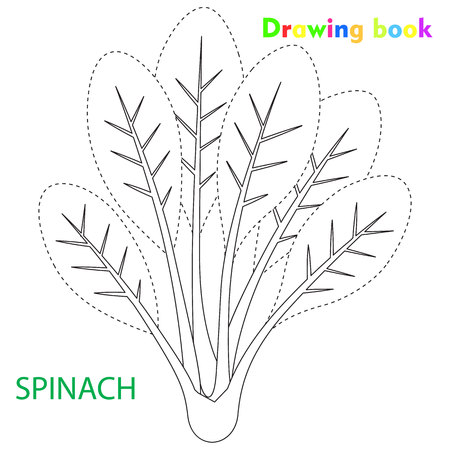 시금치 색칠 및 그림 책 야채 디자인 일러스트 레이션