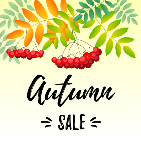 Lettering of Autumn sale on yellow background decorated with rowan berries and leaves in red, green, orange for poster, sale, shop, advertising, catalog, hand bill, banner