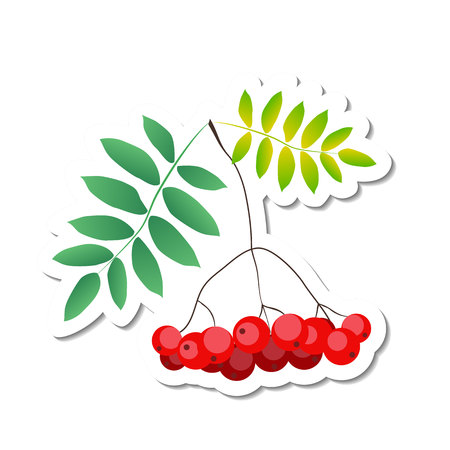 Vector illustration of rowan berry and leaves in red, green, yellow with white outline and shadow in paper cut style for decoration, sticker, toys, book illustration, print, magnet