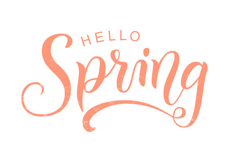 Modern calligraphy lettering of Hello Spring in pink textured isolated on white background for decoration, greeting card, poster, banner, sticker, postcard, calendar