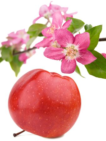 Red apple and branch of flowers