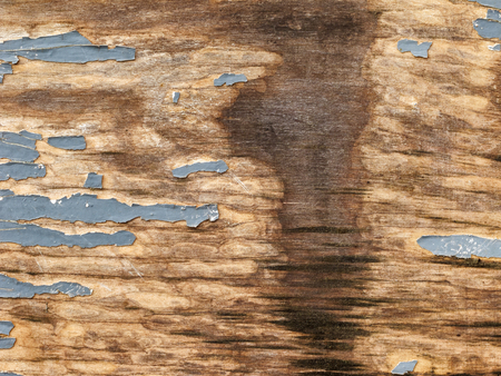 Texture of natural wood plank with cracked gray paint, spot of water spillage, abstract background.
