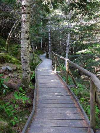 пышной листвой: Извилистый путь через пышной листвой