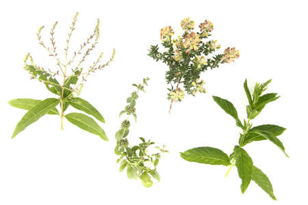 Arrangement of medical herbs and edible flowers. Stock Photo - 14167259