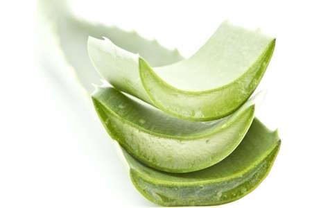 proved: Aloe � ampiamente dimostrato di essere molto efficace nel trattamento di vari disturbi della pelle, e bellezza. Si guarisce le ferite e previene infezioni e rafforza il collagene per ricostruire i tessuti danneggiati. Archivio Fotografico