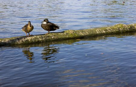 climbed: Ducks climbed on a trunk floating in a lake.