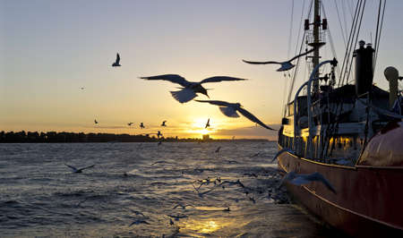 moored: Moored ship at sunset in Hamburg harbor and birds flying around. Stock Photo
