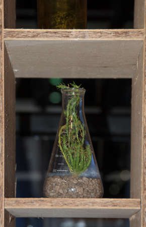 decoratiion: Tree in the bottle for decoratiion Stock Photo