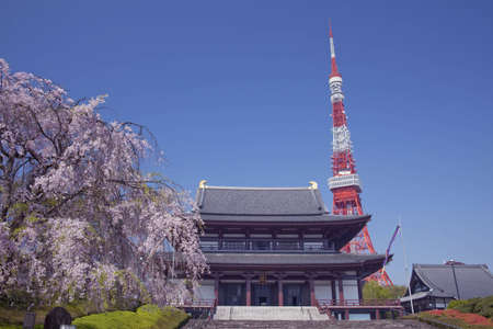 tokyo tower: Cherry tree, temple and Tokyo Tower
