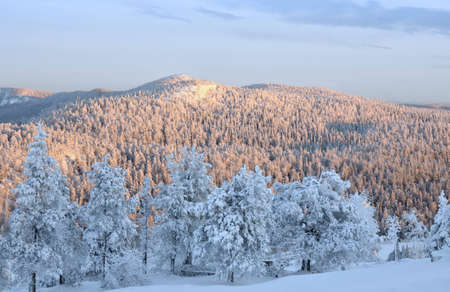 Sunset in Lapland  Beautiful winter landscape with snow-covered trees  photo