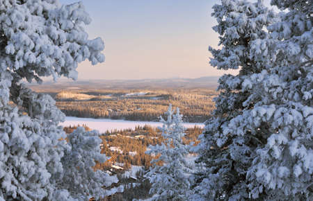 Sunset in Lapland  Beautiful winter landscape with snow-covered trees