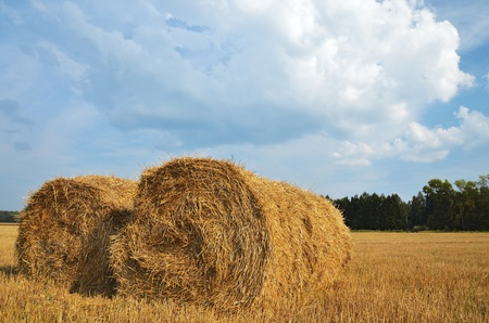 Straw bales in the countryside on a perfect sunny day  photo