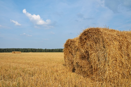 Straw bales in the countryside on a perfect sunny day