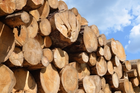 timber harvesting: pile of wooden logs under blue sky Stock Photo