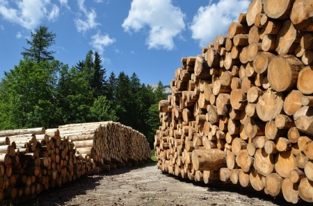 piles of wooden logs under blue sky Reklamní fotografie