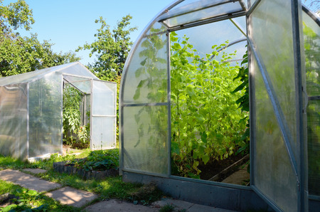 Greenhouse in  garden with tomato and cucumber plants 版權商用圖片