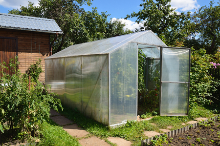 Greenhouse in back garden with tomato plants 版權商用圖片