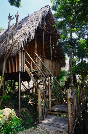 bungalow with thatched roof in a tropical forest