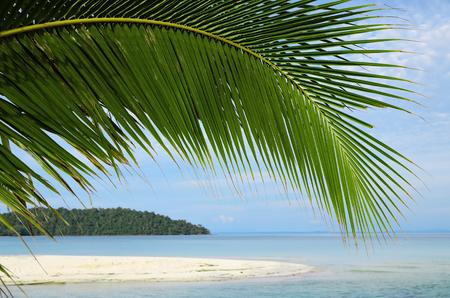 palm leaf and tropical seascape Reklamní fotografie
