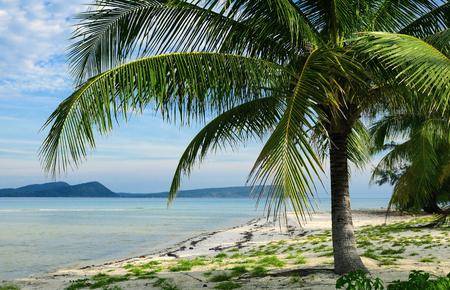 palm tree and tropical landscape Reklamní fotografie