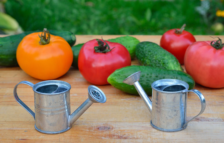 Small watering cans with tomatoes and cucumbers on the wooden surface. Selective focus 版權商用圖片