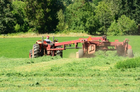 Farmer cutting a alfalfa field with a swather Stock Photo - 10903118