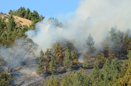 Natural cover fire burning in pine trees and light grass near Roseburg Oregon Stock Photo