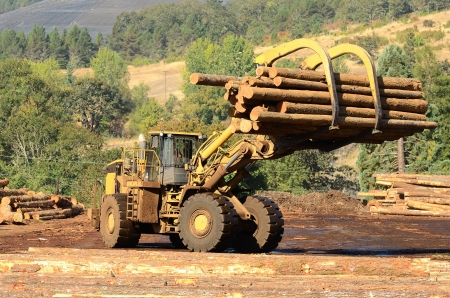 A large wheeled loader unloads a log truck at a small log sawmill in Oregon