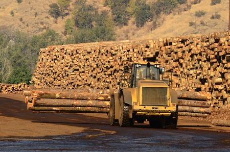 Small wheeled loader moving logs around the log yard at a local sawmill in Oregon Stock Photo - 11202493