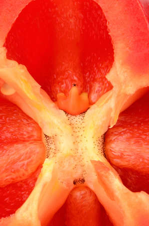 bell peper: The inside pulp and seeds of a colored bell peper in studio