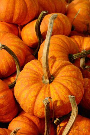 Small decorative pumpkins at a farmers market photo