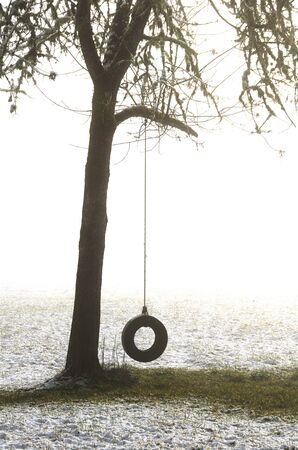 tire: A tire swing hangs on a tree following a low elevation snow storm near Roseburg Oregon