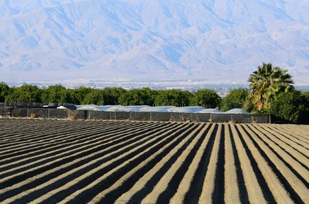 agricultural area: Rows of dirt in the agricultural area near Palm Springs California