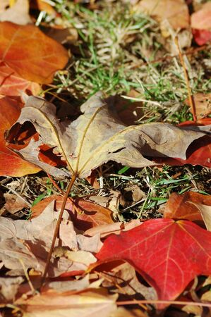 Mixed fallen leaves on the ground 스톡 콘텐츠